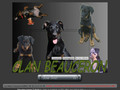 Clan beauceron