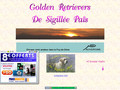 Détails : Golden retrievers de Sigillee pais